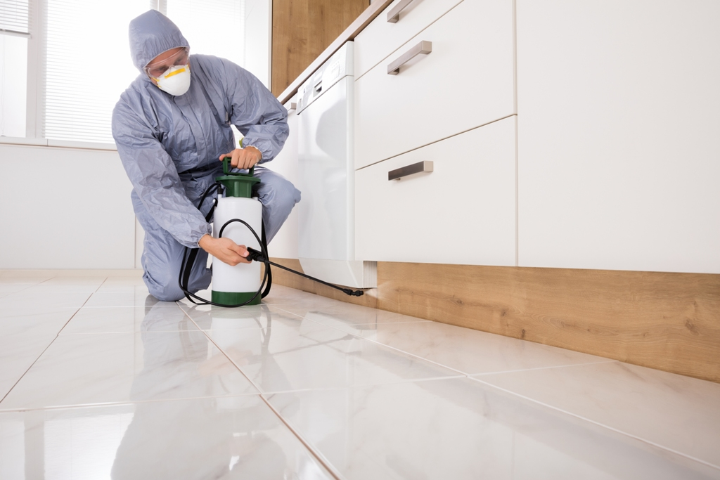 Pest Control Services in Doha Qatar